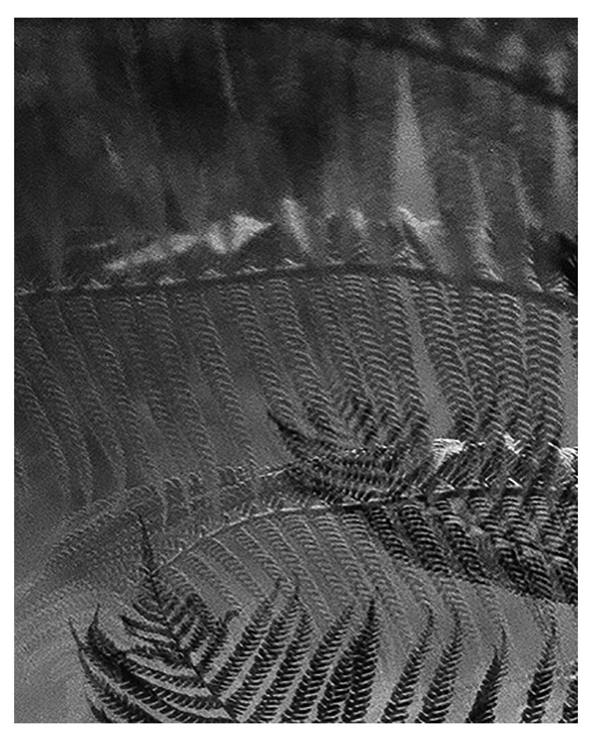 dreaming of silver (darkroom print)