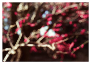 postcard prune