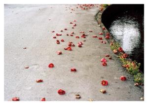postcard the fall