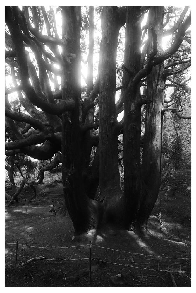 untitled (darkroom print)