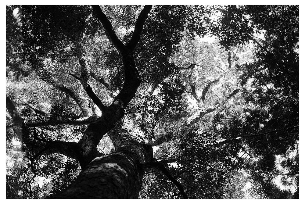 up (darkroom print)